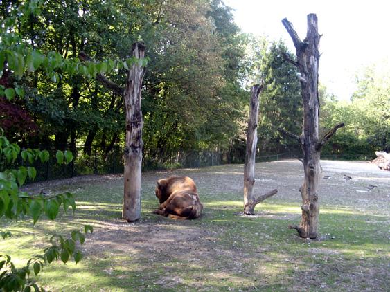 zoo_12